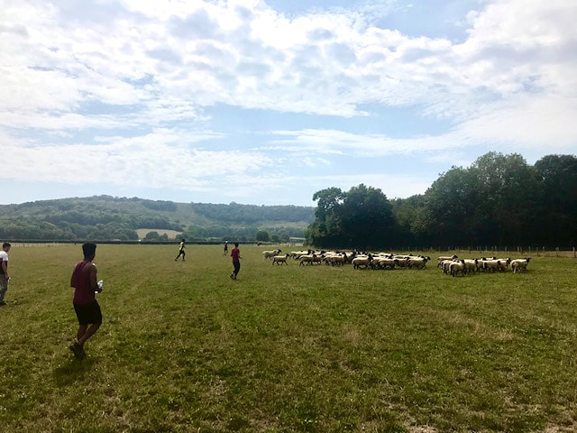 Picture of young people in field with sheep at Jamie's Farm © Big Leaf Foundation